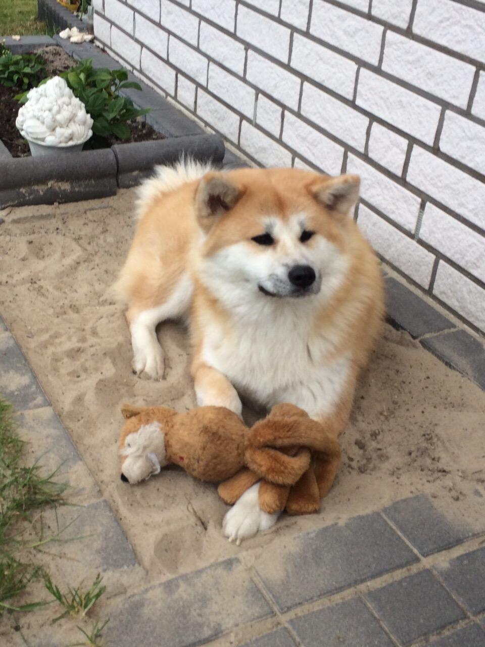 Me and my fox cuddling